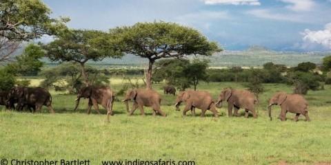 3-Day Saver Selous Safari