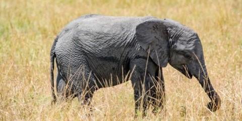 4-Day Selous Ngalawa Safari