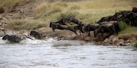 8-Day Safari Highlights: Kenya & Tanzania