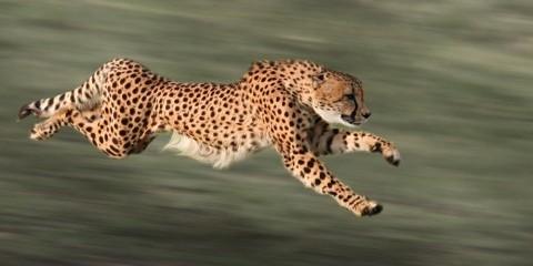 8-Day Best of Tanzania Luxventure® Safari