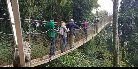 2-Day Nyungwe Canopy and Kivu Lake Adventure