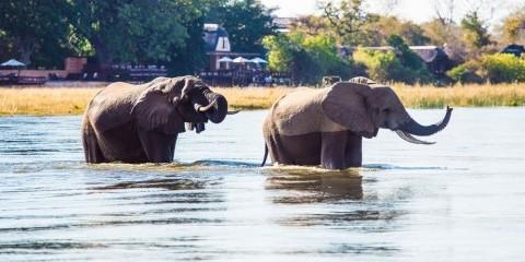 9-Day Zambia: Majestic Victoria Falls&Zambezi, Luangwa