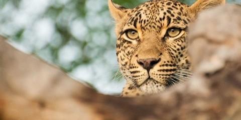 3-Day Exclusive Sabi Sand Safari Experience