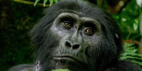 8-Day Kampala to Kigali Overland Safari
