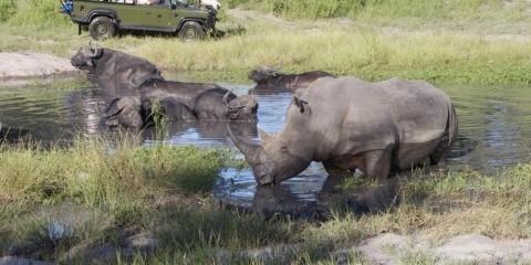 7-Day Sabi Sand & Hluhluwe Safari