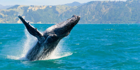 20-Day Madagascar - Whale Migration