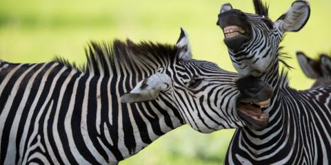 4-Day Tanzania Secrets Camping Safari