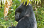 9-Day 1-2 Gorilla Tracking Adventure and Wildlife Safari