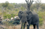 7-Day Family Friendly Kruger & Victoria Falls