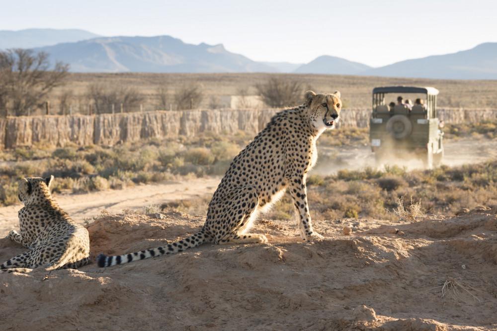 Villa Safari South Africa