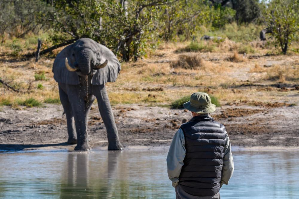 Botswana Safari Experience: Predators & Elephants