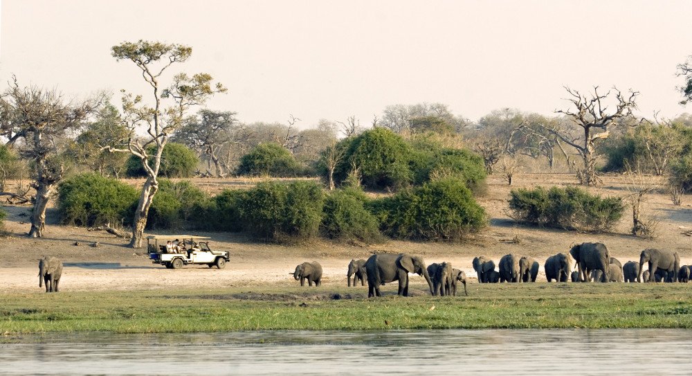 Botswana Safari for You