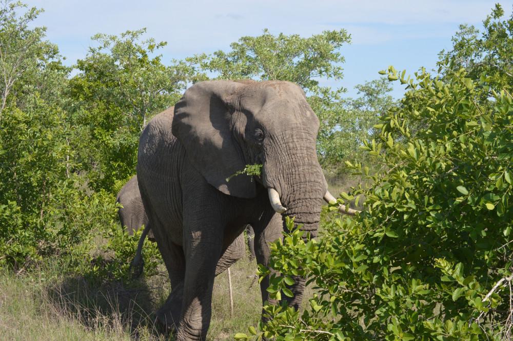 Kruger, Cape Town Adventure & Garden Route Tour