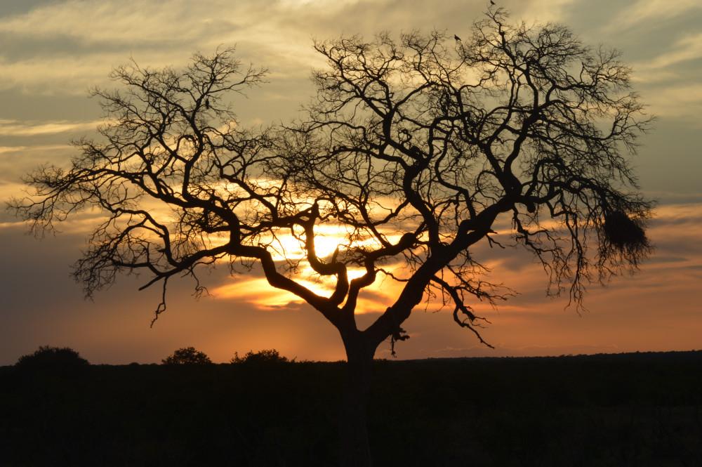 Kruger Park, Cape Town, Garden Route & Vic Falls