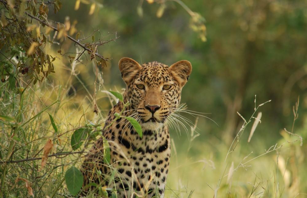 Moremi Expedition - Botswana Mobile Safari