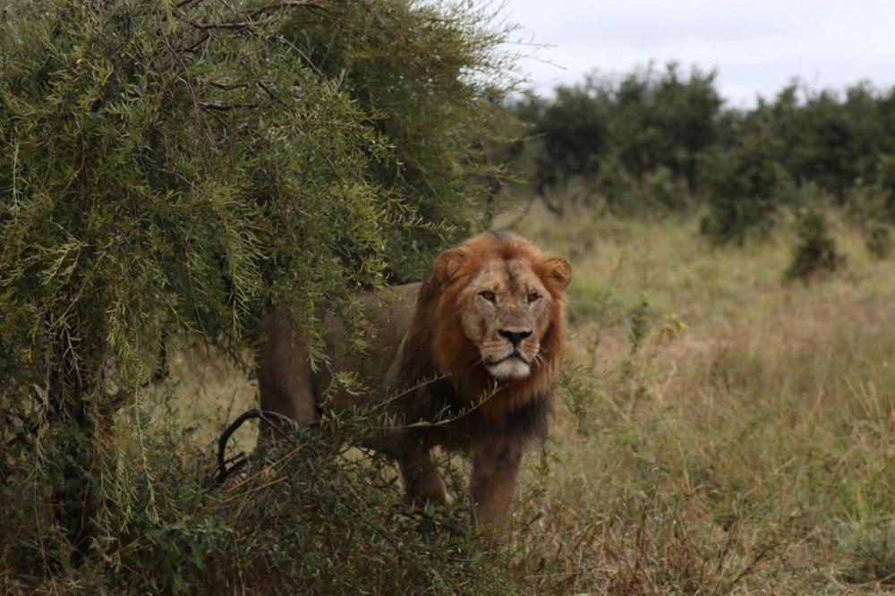 Chobe Savuti Moremi Khwai Delta Exclusive Safari