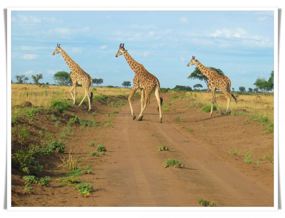 Murchison, Queen & Kibale National Parks Tour