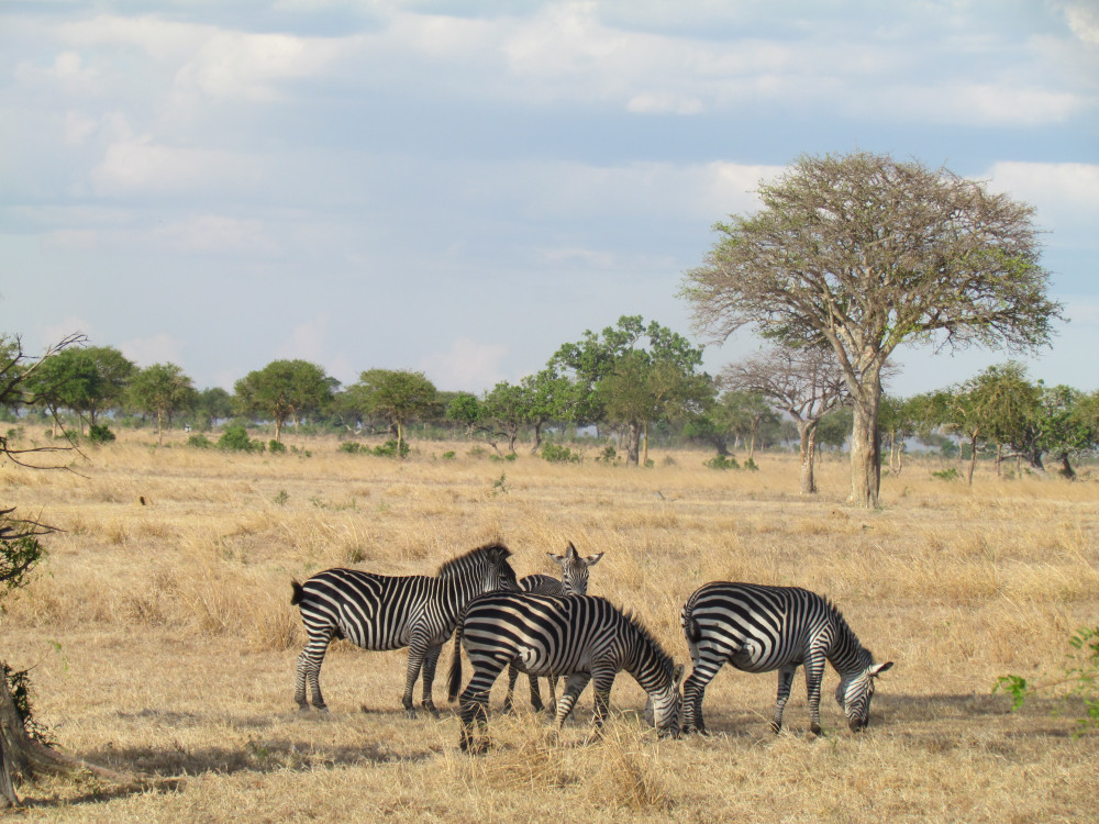 Excellent Opportunity Touring Mikumi National Park
