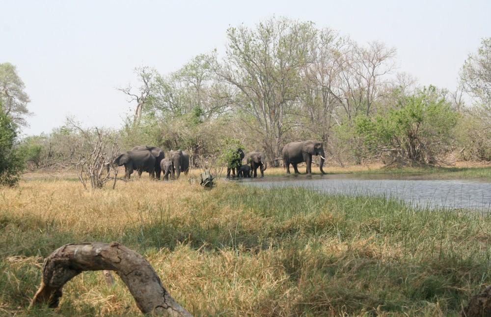Adventure Mobile Safari Through Botswana