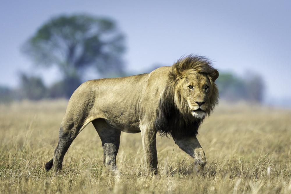 Zambia Kafue & Livingstone Luxury Safari