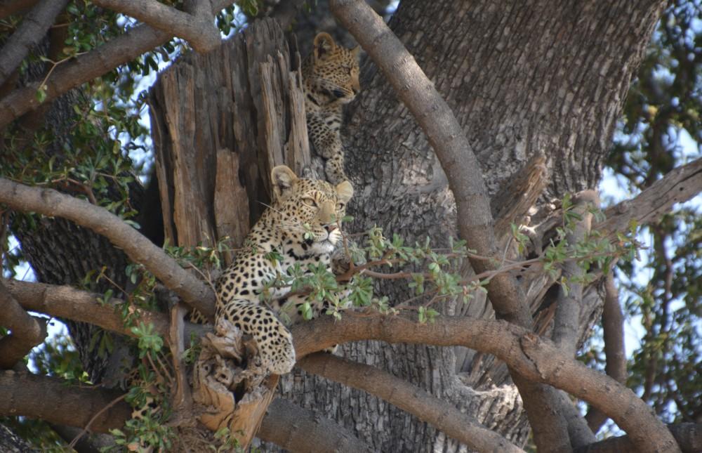 Okavango Delta & Linyanti Green Season Special