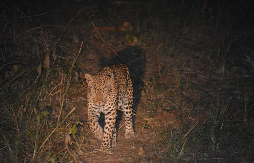 Affordable South Luangwa Safari