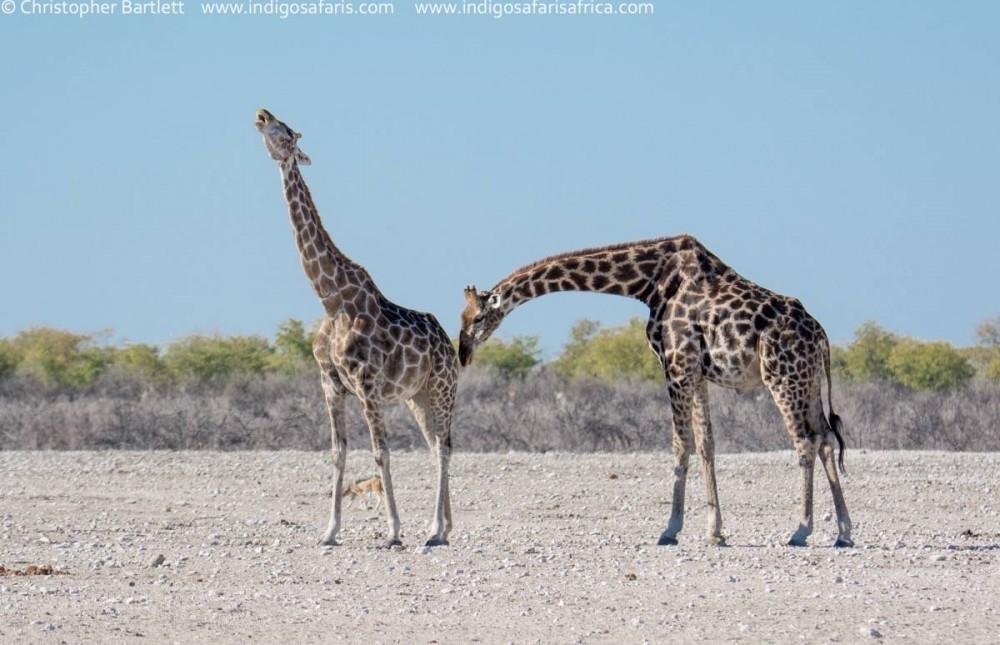 Northern Namibia Self-Drive Adventure