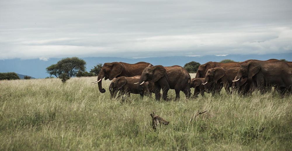 Zimbabwe Safari Experience
