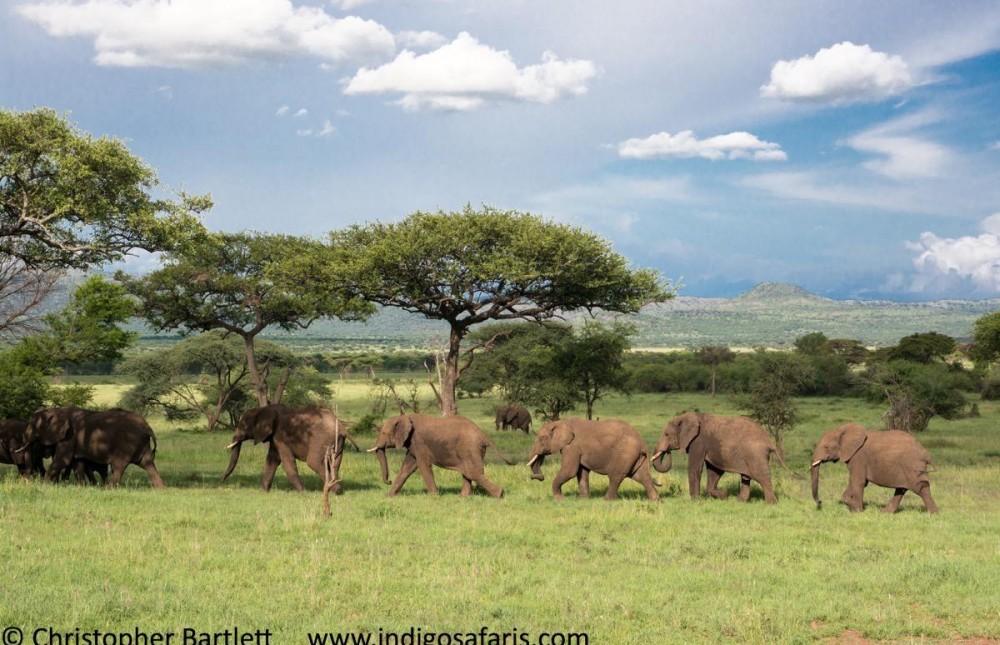 Saver Selous Safari