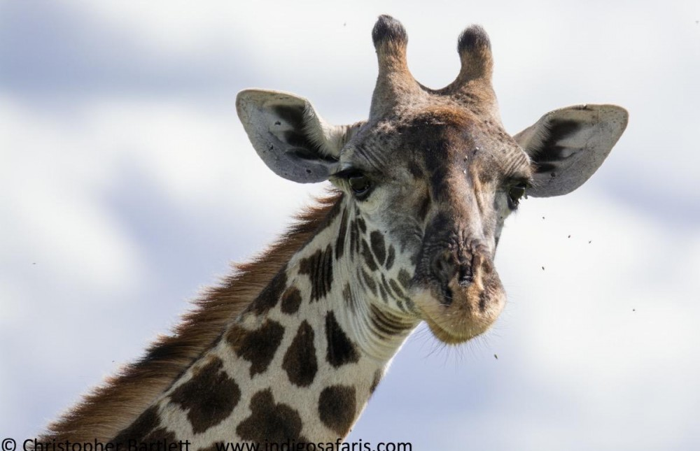 Tsavo East & West Midrange Safari