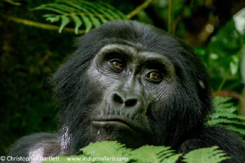 Kampala to Kigali Overland Safari