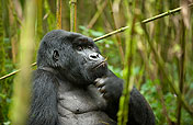 3-Day Gorillas and Golden Monkeys Tour