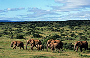 Addo Elephant NP Photos
