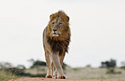 5-Day Kwa Madwala Lodge & Kruger Park Safari