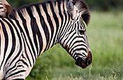 3-Day Kruger Park Budget Lodge Safari