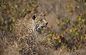 8-Day Cape Town Cultural Immersion & Kruger Safari