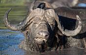 4-Day Big Five Safari in the Klaserie (Greater Kruger)