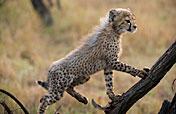 4-Day Lodge/Tent Kruger Park Safari