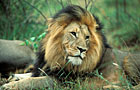 Kruger NP Photos