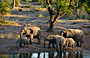 5-Day Safari to Kruger Park via Panorama Route