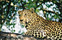 10-Day Luxury Sabi Sands and Panorama Route