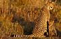 3-Day Kapama Classic Safari