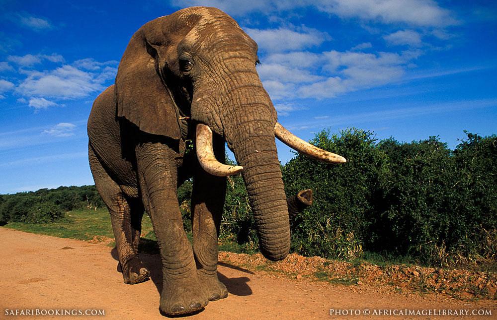 Addo Elephant National Park Tours