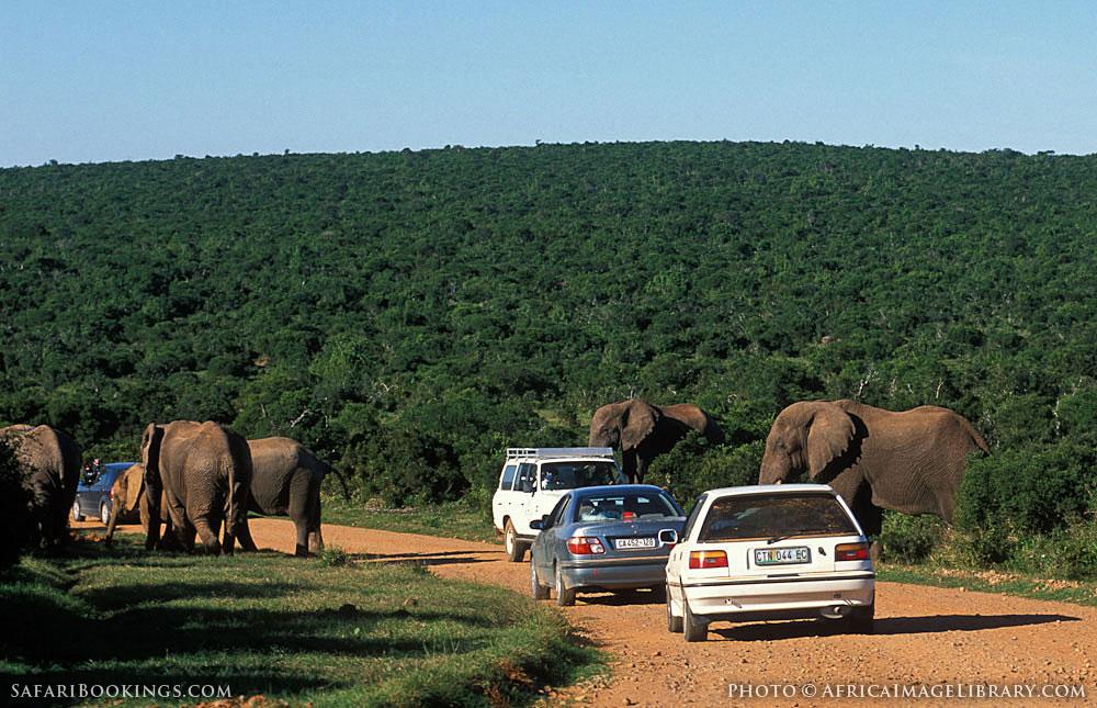 Addo Safari Tours