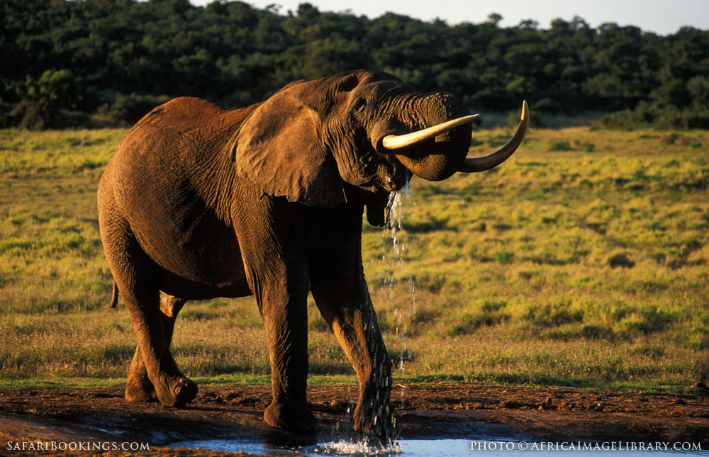 Addo South Africa  city pictures gallery : Addo Elephant National Park – Travel Guide, Map & More!
