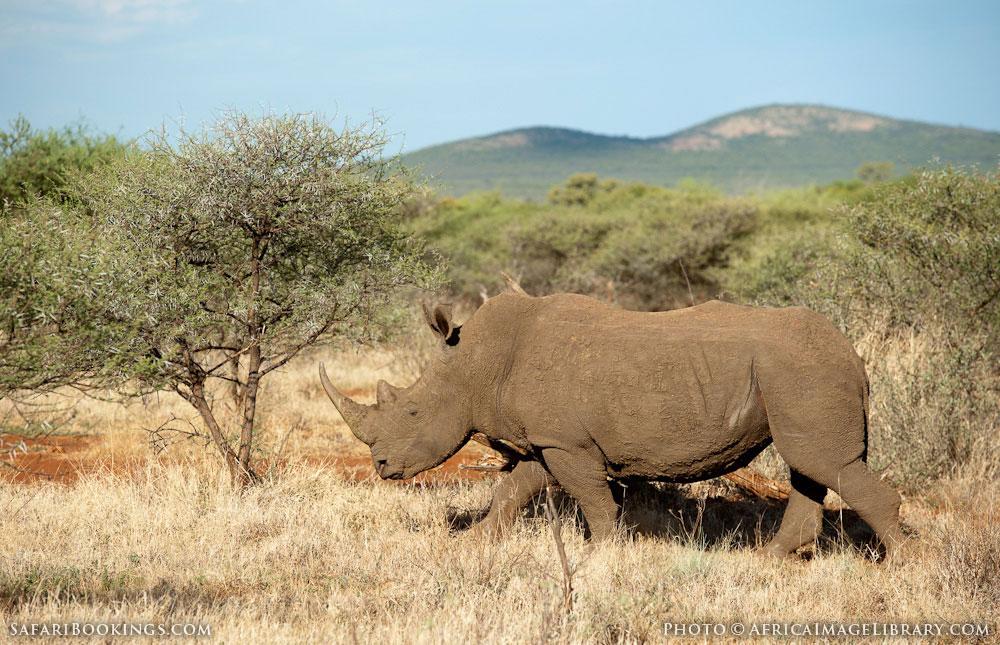 Expert Rating Reviews >> Madikwe Game Reserve – Travel Guide, Map & More!