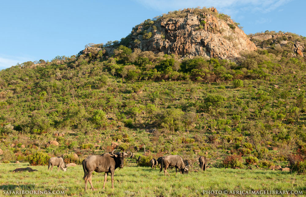 Pilanesberg South Africa  City pictures : Pilanesberg Game Reserve – Travel Guide, Map & More!