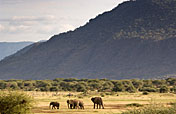 Lake Manyara NP Photos