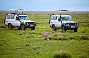 3-Day / 2 Nights Serengeti NP / Ngorongoro CA