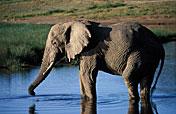 8-Day Selous Game Reserve & Ruaha National Park Safari